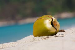 Fallen coconut broken up Royalty Free Stock Photography