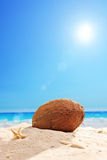Fallen coconut in the sand of a beach on a sunny day Royalty Free Stock Photos