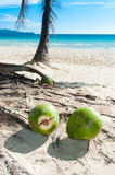 Fallen coconuts. Some coconuts on a tropical beach Royalty Free Stock Photos