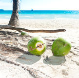 Fallen coconuts. Some coconuts on a tropical beach Stock Photos