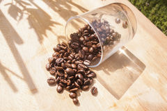 Fallen coffee beans. A fallen glass with brown coffe beans Stock Photo