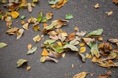 Fallen colorful autumnal leaves on urban asphalt road Stock Image