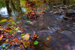 Fallen colorful beeches and aspen leaves caught on boulder in mountain stream. Wavy rapids blurred by long exposure, blue green re. Flection in cold water Royalty Free Stock Photo