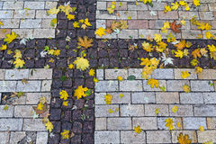Fallen colorful leaves on the pavement Stock Photo