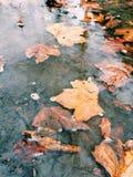 Fallen Colors Stock Photo