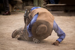 Fallen Cowboy. In a fight Royalty Free Stock Photo