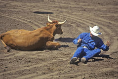 Fallen cowboy at rodeo Royalty Free Stock Photography