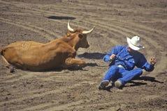 Fallen cowboy at rodeo with steer, Santa Barbara, CA Stock Photos