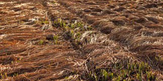 Fallen crops on the field Stock Photos