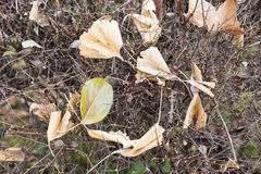 Fallen dead leaves Royalty Free Stock Photography