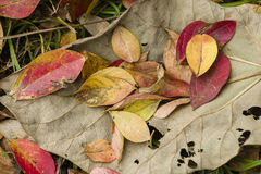Fallen dead leaves Stock Photos