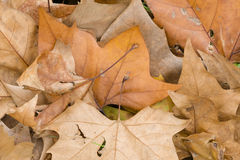 Fallen dead leaves Stock Photo