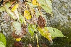 Fallen dead leaves Royalty Free Stock Photo