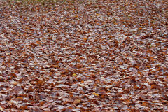 Fallen dead leaves Royalty Free Stock Photos