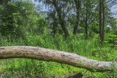 Fallen dead tree Stock Photography