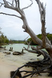 Fallen dead tree on tropical beach. A dead tree lies across a tropical lagoon. A lush island and forest is in the background Stock Photos