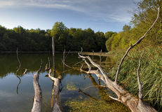 Fallen dead trees on the shore of the pond Royalty Free Stock Photography