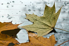 The fallen down autumn leaves Stock Images