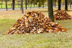 The fallen-down foliage Stock Photos