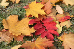 The fallen down leaves Stock Photography