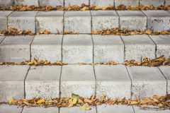 The fallen down leaves. On a ladder in park Royalty Free Stock Images