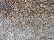 The fallen-down pine needles cover the ground Royalty Free Stock Photography