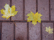 The fallen-down yellow leaves on a wet path in the park close up. Royalty Free Stock Photography