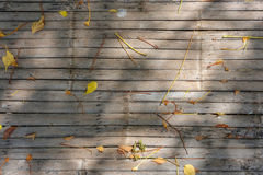 The fallen dried leaves and flowers on the bamboo mat with sunlight shadow. Stock Photo