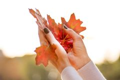 Fallen dry autumn leafs in young girl hands in air royalty free stock photography