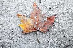 Fallen dry leaf. A lone fallen leaf on the ground Royalty Free Stock Photos