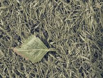 Fallen dry leaf in the grass. Dotted leaves  by tree pollen. Artificial green turf. Texture in detail view Stock Photos