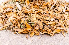 Fallen dry leaf on the ground Stock Photography
