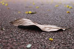 Fallen dry leaf on running track stock photo