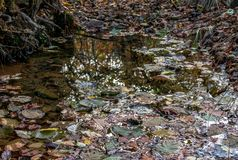 Fallen dry leaves of the autumn forest in a puddle after rain. stock images