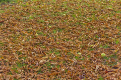 Fallen dry leaves autumn Stock Images