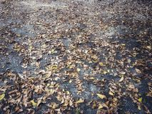 Fallen dry leaves disrupted on cement floor. Selective focus of small leaf stock image