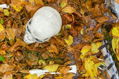 Fallen dry leaves on the grass with a skull. And other bones stock photography