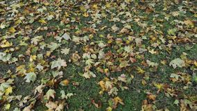 Fallen dry leaves on the green grass in the forest on a cloudy day in autumn stock video