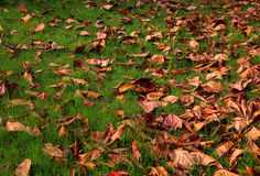 Fallen dry leaves Royalty Free Stock Images