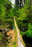 fallen för parkrainforest för hoh nationell olympic tree Royaltyfri Foto
