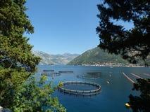 Fallen für Meeresfrüchte im Kotor-` s bellen Kotor-Stadt, Montenegro Lizenzfreies Stockfoto