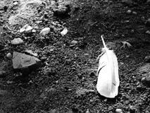 Fallen feather. Fallen white  feather on ground with dirt and pebbles Royalty Free Stock Images
