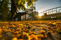 Fallen flowers of the tree lie on the asphalt in the rays of the setting sun in the park of Turia. Valencia. Royalty Free Stock Photo