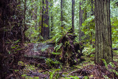 Fallen Forest Tree Stock Photo