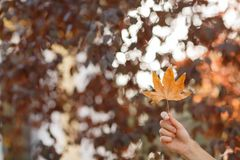Yellow leaf in hand against of autumn leaves background. royalty free stock photography