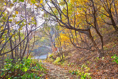The fallen golden leaves _ autumnal scenery Royalty Free Stock Photo