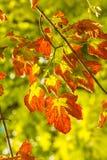 fallen låter vara naturlig textur vibrerande Royaltyfria Foton