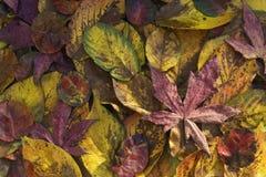 fallen låter vara naturlig textur vibrerande Royaltyfri Fotografi