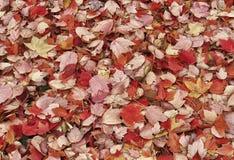 fallen låter vara naturlig textur vibrerande Royaltyfria Bilder