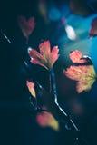 fallen låter vara naturlig textur vibrerande Fotografering för Bildbyråer
